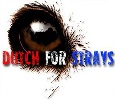 Stichting Dutch for Strays