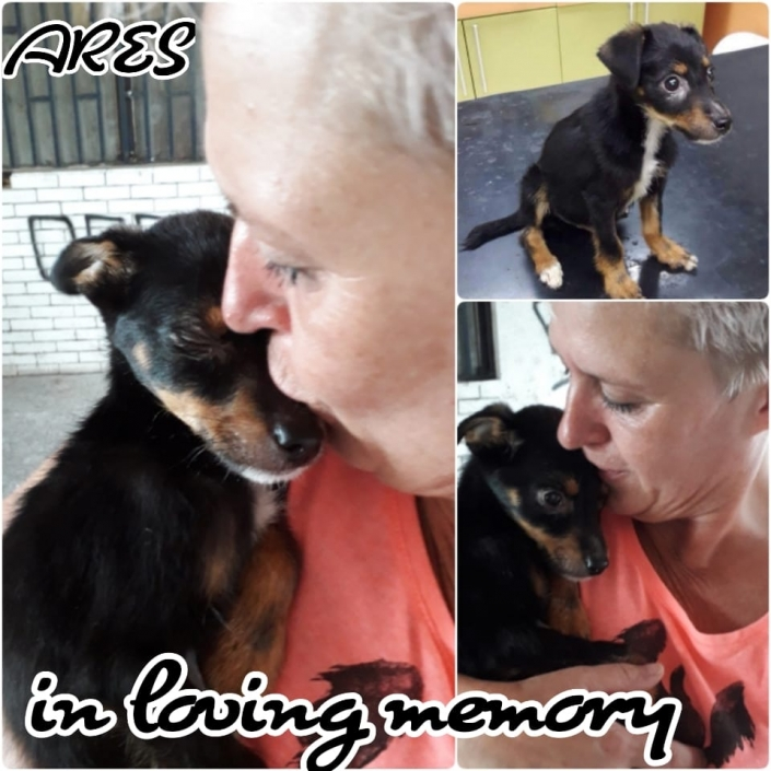 Ares - in loving memory